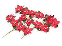 Mini-Poinsettia-Flowers.jpg