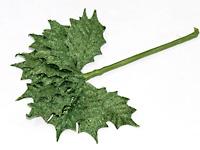 Mini-Velvet-Holly-Leaves.jpg
