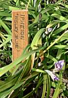 Wooden Labels