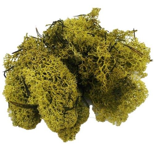 Finland-Moss-Olive