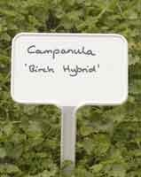 Plant Labels 16cm Angle Head Label Green