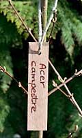 Wooden Garden Markers