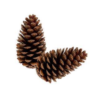Maritima Cones - Large Cones