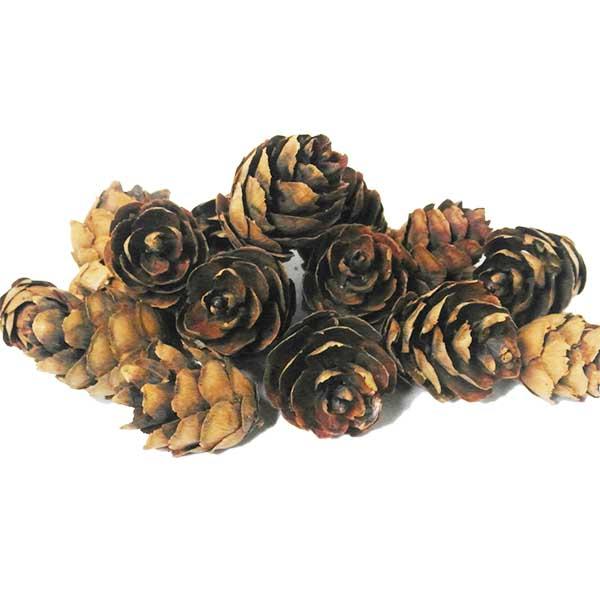 mini-pine-cones