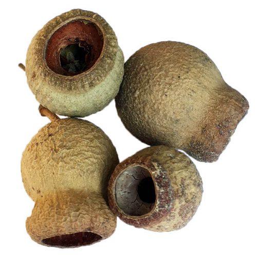 Eucalyptus Pods