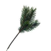 Fir Spruce Pick