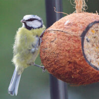 Wild Bird Feed - Coconut Feeder