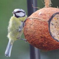 Wild Bird Feed - Coconut Feeder