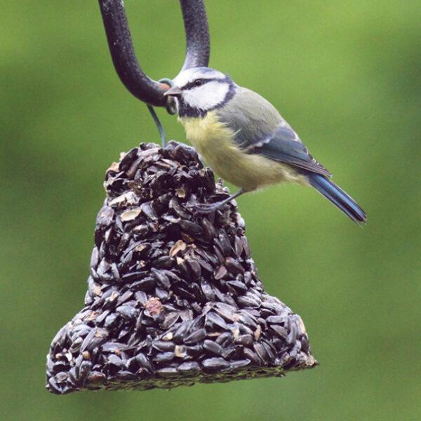 Sunflower Seed Bird Feeder